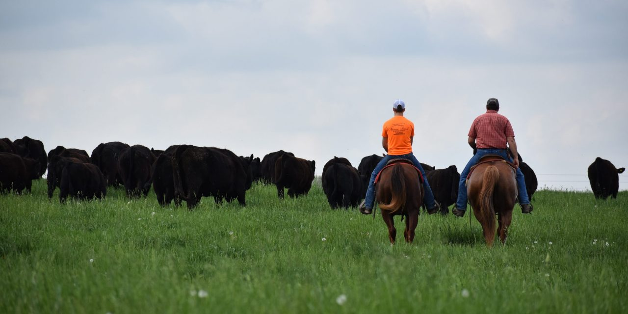 Missouri's Small Family Farms Show Dramatic Growth in Census of Agriculture