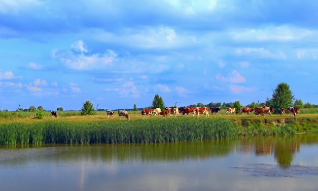 New Clean Water Rule Gives Farmers and Ranchers Clear Guidelines