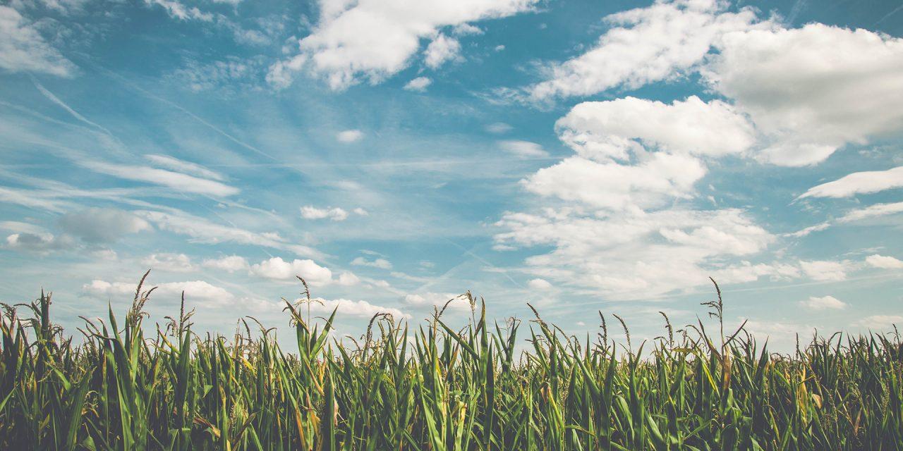 New Market Facilitation Program Helps Missouri Farmers