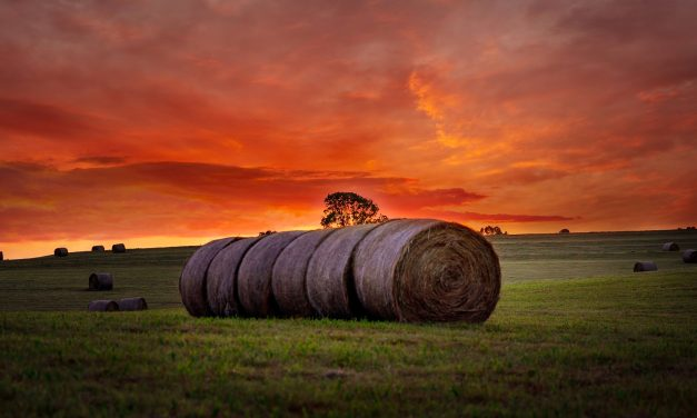 Missouri Farm Bureau Survey Finds Farmers Hesitant Entering 2020