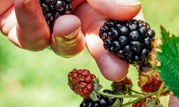 Missouri's Agritourism Venues Provide Lasting Family Memories